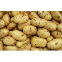 Buy cheap Minerals India Organic Potato Heath Benifits For Vegetable Market from wholesalers