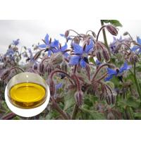 Buy cheap Natural Extract Borage Oil Liquid Omega 6 , Borage Oil For Skin And Hair Hexane Refining from wholesalers