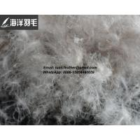 China High quality 5%~95% Grey Duck down and feather Manufactures