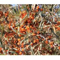 Buy cheap Sea buckthorn Pulp Oil natural health product for food GMP factory produce from wholesalers