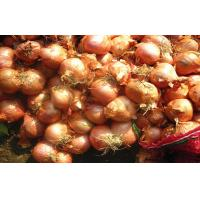 China Small Banana Red Onion Shallot on sale