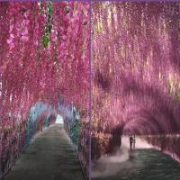 Buy cheap 75cm 110cm Silk Green Plants Artificial Witseria Flower Hanging Ceiling from wholesalers