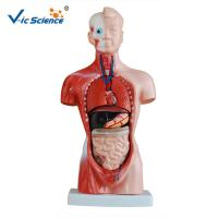 Wholesale Eco - Friendly 26cm Human Body Torso Model 15 Parts  Toy Model from china suppliers