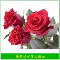Buy cheap 2019 Export high quality fresh cut rose flower marigold flowers from farm from wholesalers
