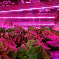 Buy cheap SMD 2835 Led Indoor Garden Lights For Flower / Vegetable , 6-8m Sensor Distance from wholesalers