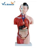 Wholesale 42cm Female Human Torso Model 15 Parts Educational Model CE Approved from china suppliers