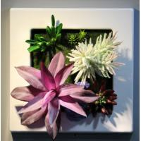 Wholesale Indoor House Artificial Succulent Plants Wall Art Hanging Ornaments for Restaurant Wall from china suppliers