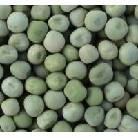 Buy cheap Food Grade Dried Garden Peas Green Beans Custom Packing 2 Years Shelf Life from wholesalers