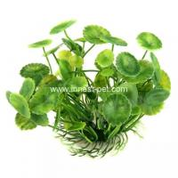 Wholesale Golden fish bowl aquatic water plant hydrocotyle verticillata from china suppliers