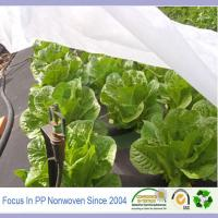 Wholesale PP spunbond nonwoven fabric use for agricultural cover plant from china suppliers