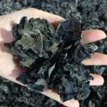 Buy cheap Factory Price Edible Organic Dried Black Fungus Flower Mushroom from wholesalers