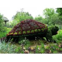 Wholesale Plastic Plants Mosaiculture Animal Topiary Plastic Tortoise Sculpture for Botanical Garden from china suppliers