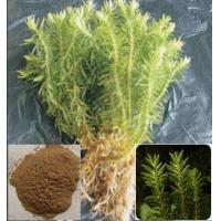Buy cheap lt-23 Celery Seed P.E. from wholesalers