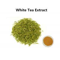 Buy cheap White Tea Leaf Extract Treating Measles, 30% Polyphenols White Tea Extract For Skin from wholesalers