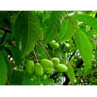 Buy cheap Olive Leaf Extract Hydroxytyrosol 10%-98% Cas.:10597-60-1 from wholesalers