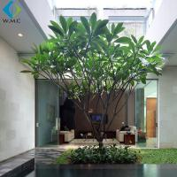 Wholesale 3.5m Artificial Plumeria Tree Without Flower , Customized Fake Green Trees from china suppliers