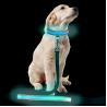 Buy cheap Custom Popular Large LED Dog Collar , Flashing Long Dog Leash For Pet Walk from wholesalers