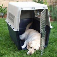 Buy cheap Plastic Airline Pet Dog Crate Kennel Carrier with Stainless Steel Door product