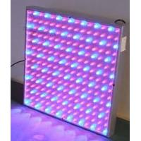 Buy cheap high intensity red blue yellow 50W 300MA led plant growing lights 85 - 264V for hydroponic from wholesalers
