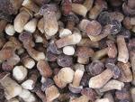 Buy cheap Frozen Boletus Edulis A,B grade Whole from wholesalers