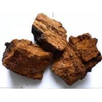 Buy cheap Chaga Mushroom Extract (Wangfeng_618 AT Hotmail Com) from wholesalers