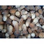 Buy cheap Frozen boletus edulis,wild mushrooms from wholesalers