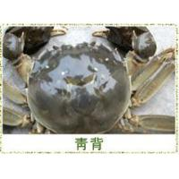 Wholesale Big binding crabs from china suppliers