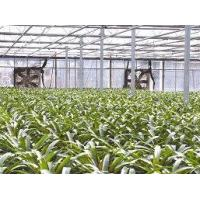 Buy cheap Polycarbonate sheet covered Greenhouse from wholesalers
