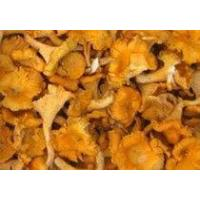 Buy cheap Dried Mushrooms from wholesalers