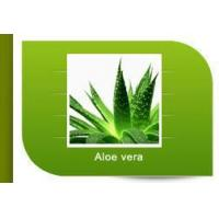 Wholesale Aloe vera from china suppliers