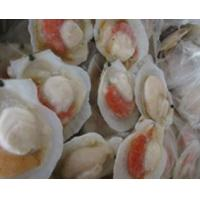 Wholesale FrozenScallop from china suppliers