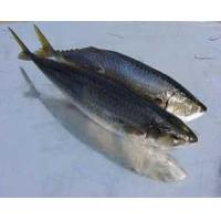 Wholesale Mackerel from china suppliers