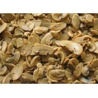 Wholesale Champignon Mushroom from china suppliers