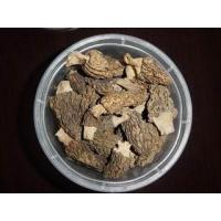 Buy cheap CONICA MORELS from wholesalers