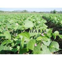 Buy cheap Frozen Vegetables: Green beans from wholesalers