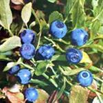 Buy cheap Bilberry ExtractLatin Vaccinium vitis-idaea L. from wholesalers