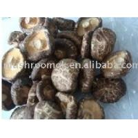 Wholesale White flower mushroom from china suppliers