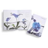 Buy cheap brochure design BR-005 from wholesalers