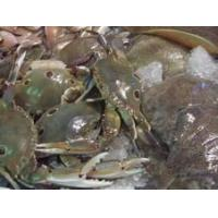 Wholesale Sea food crab from china suppliers