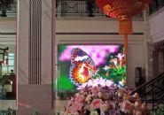 Wholesale P6三一LED from china suppliers