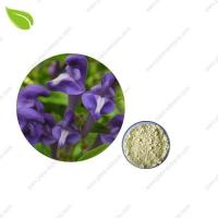 Wholesale Scutellaria Baicalensis from china suppliers