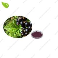 Wholesale Blackcurrant Juice Powde from china suppliers