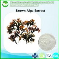 Buy cheap Brown Algae Extract from wholesalers