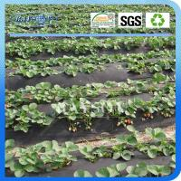 Pp Spunbond Woven Fabric Planting Cover Manufactures