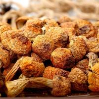 Buy cheap Agaricus Blazei Murill Pow from wholesalers