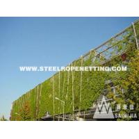 Wholesale Stainless Steel Cable Mesh Green plant climbing rope netting from china suppliers