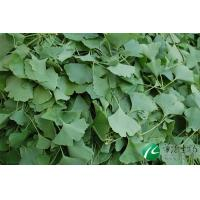 Buy cheap Gingko Leaf Extract from wholesalers