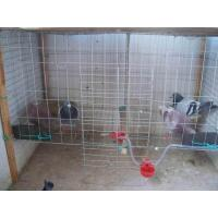 Date:2015-4-2 click rate:126 pigeon cage