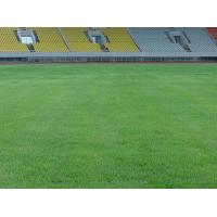 Wholesale Football lawn Natural grass football field from china suppliers