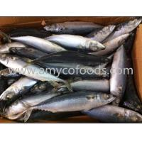Wholesale Pacific mackerel WR from china suppliers